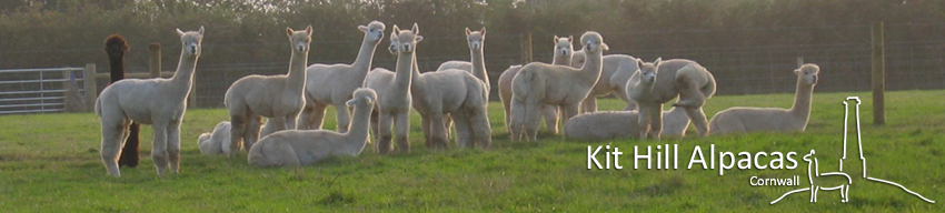 Kit Hill Alpacas